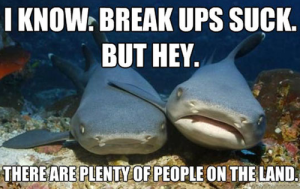Sharks think they are slick.