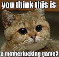 Word, cat.